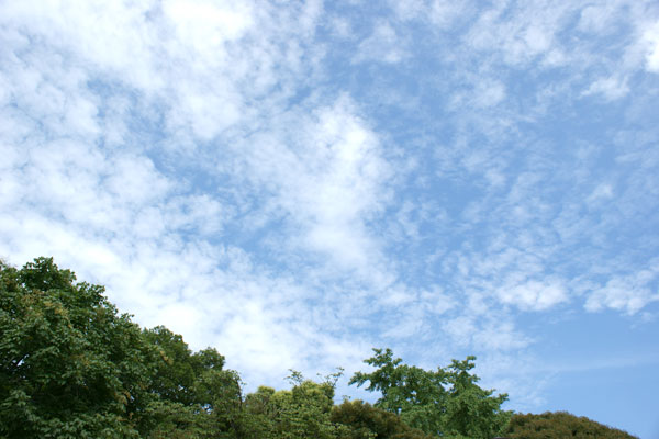 090714梅雨明け.jpg