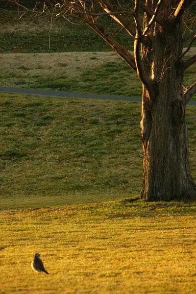 treebird.jpg